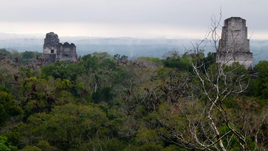 Ruïnes in het oerwoud bij Tikal (Guatemala) / (c) Wim A.E. Jansen